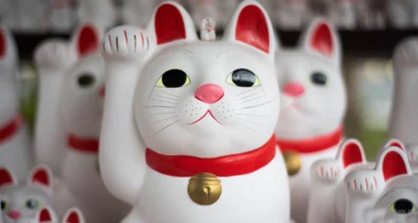 石家庄樱花日语培训提升课程