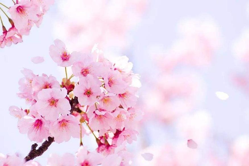 大连樱花日语培训
